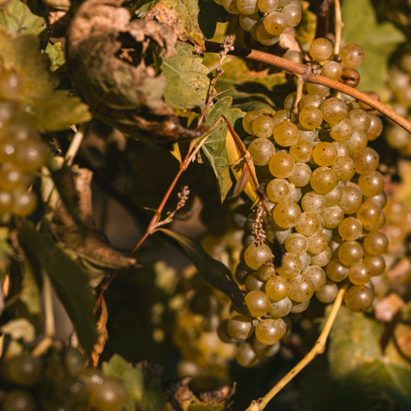Event Recap: Scheuermann Community Harvest